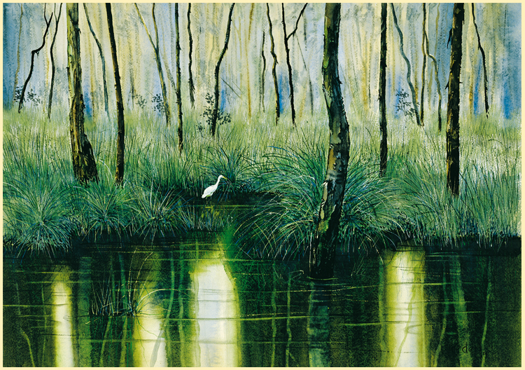 """Tea Tree Swamp, Cardwell National Park"""
